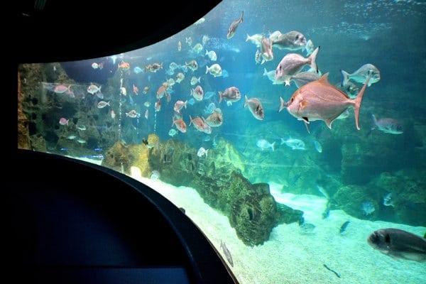aquarium crete