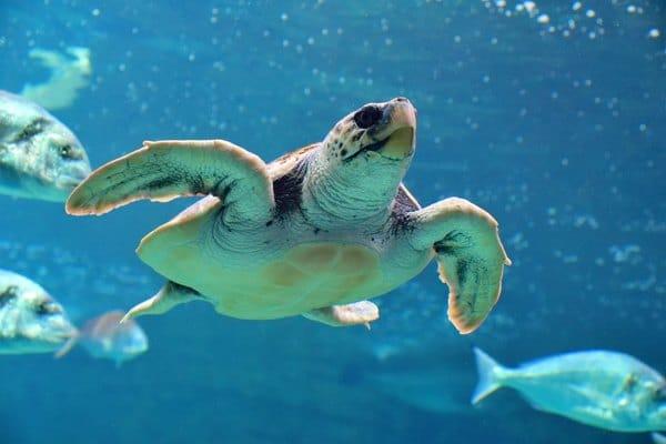 tortue-cretaquarium