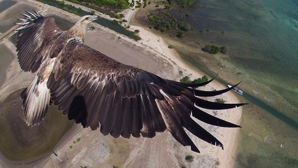 aigle-en-plein-vol