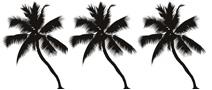 Logo palmier