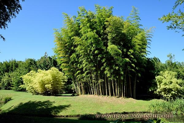 haie-bambou