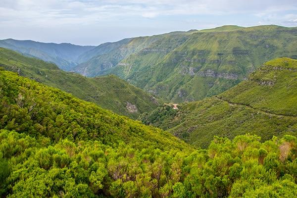 foret-endemique-madere