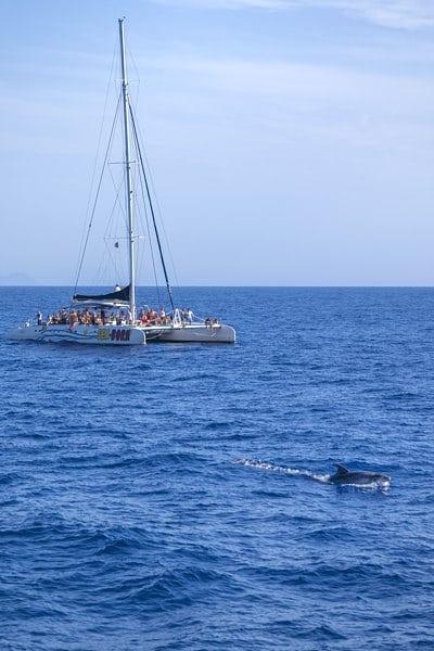 trimaran-dauphin