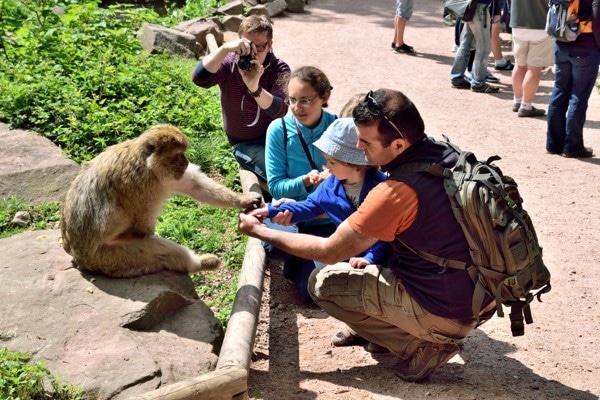 nourrir singe