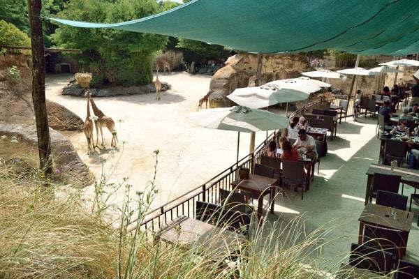 restaurant-zoo