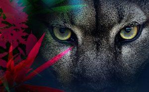 Affiche zoo Vincennes