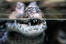 Zoo de Montpellier - crocodile